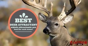 Best Deer Attractant For Hunting | Our Buyer's Guide