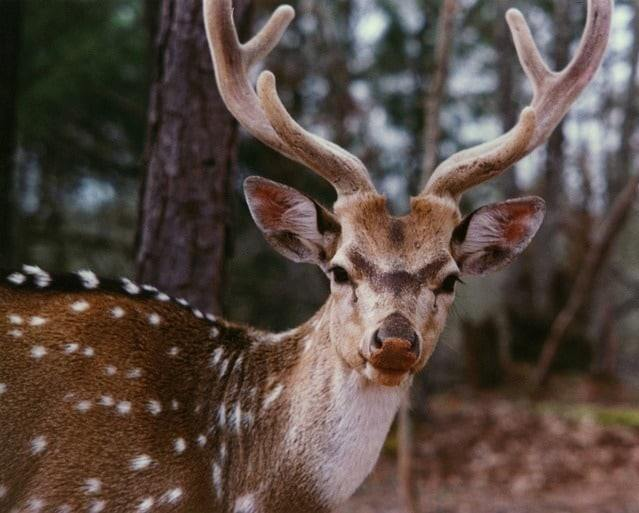 what is the best deer attractant for hunting