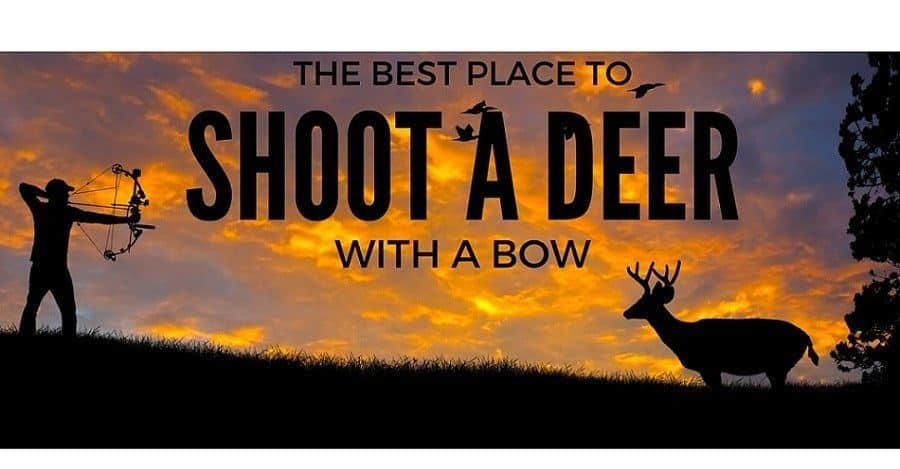 where to shoot a deer with a bow- the best place