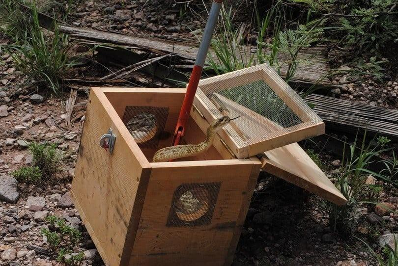 How to make a snake trap