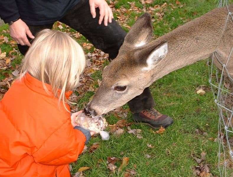 best deer feeding times (2)
