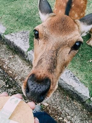 best deer feeding times (3)