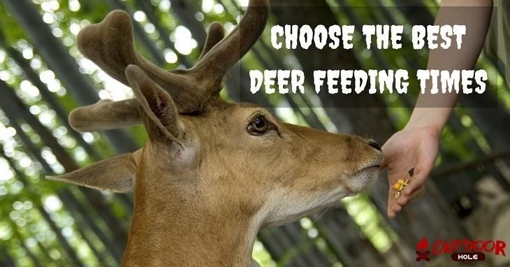 best deer feeding times