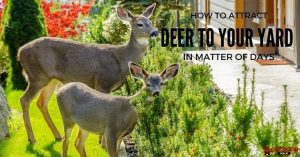 How To Attract Deer To Your Yard In A Matter Of Days?