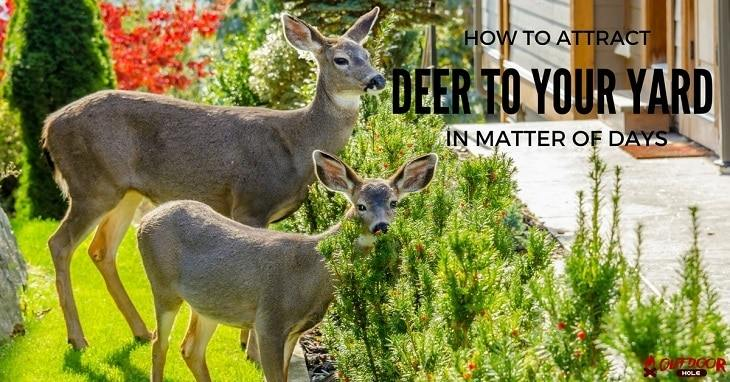how to attract deer to your yard