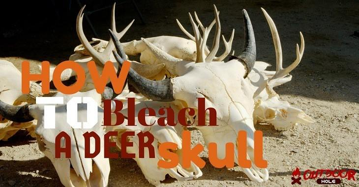 How To Bleach A Deer Skull Properly Even If It's Your First Time?