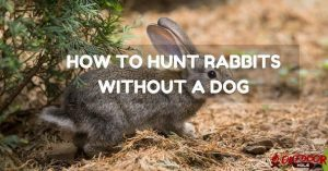 How To Hunt Rabbits Effectively Without A Dog?
