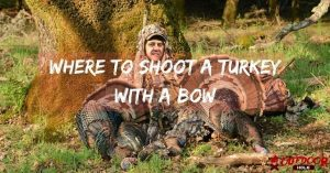 Where To Shoot A Turkey With A Bow? Time To Be A Better Hunter