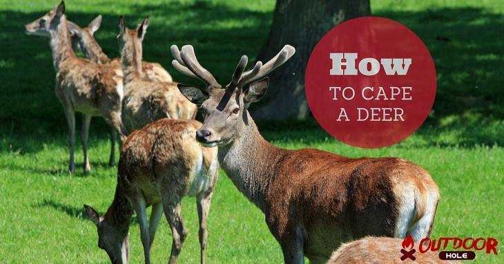 How To Cape A Deer Quickly Without Ruining The Meat?