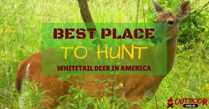What Is The Best Place To Hunt Whitetail Deer In America?