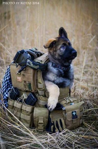 tips-for-hunting-with-a-dog-3