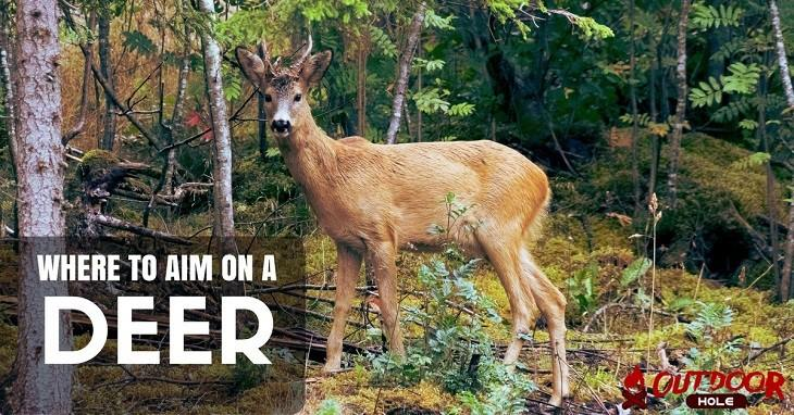 Where To Aim On A Deer? The Best Shot Placement